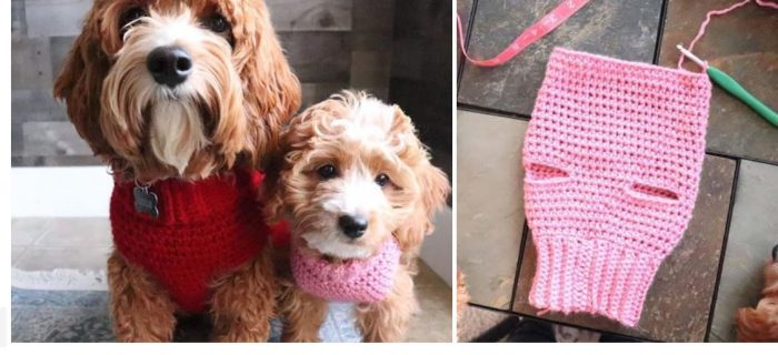 All-Size Crochet Dog Sweater | thecrochetspace.com