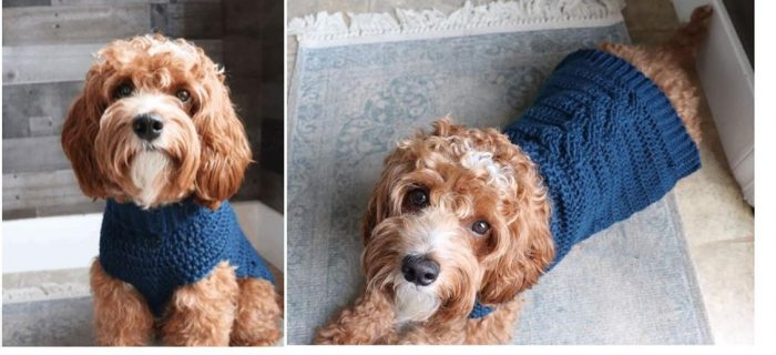 Fancy Crochet Dog Sweater | thecrochetspace.com