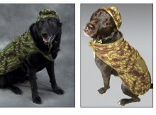 Dog´s Hunter Crochet Set |thecrochetspace.com