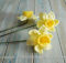 crochet spring daffodils | the crochet space