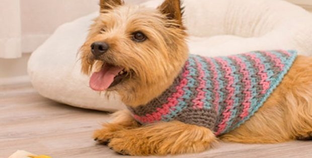 Sporty Style Crochet Dog Sweater Free Crochet Pattern